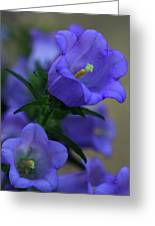 Canterberry Bells Greeting Card