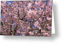 Canvas Of Pink Blossoms Greeting Card