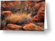 Canyon Grasses Greeting Card