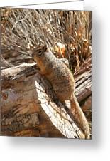 Canyon Squirrel Greeting Card