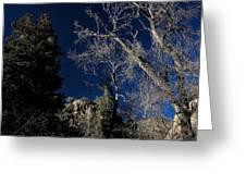 Canyon Tree Greeting Card
