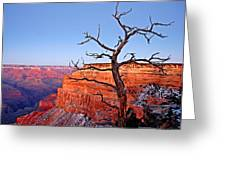 Canyon Tree Greeting Card