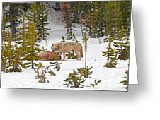 Canyon Wolf On Elk Kill Greeting Card