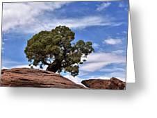 Canyonlands Tree Greeting Card