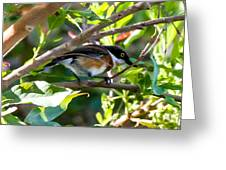 Cape Batis Greeting Card
