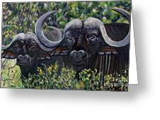 Cape Buffalo First Painting Greeting Card