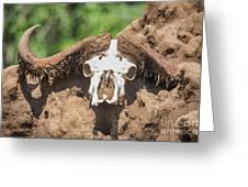 Cape Buffalo Skull Greeting Card