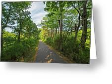 Cape Cod Rail Trail Trees Eastham Ma 2 Greeting Card