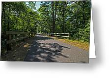 Cape Cod Rail Trail Trees Eastham Ma Fence Greeting Card