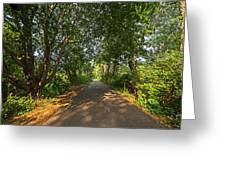 Cape Cod Rail Trail Trees Eastham Ma Greeting Card