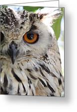Cape Eagle-owl Greeting Card