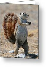 Cape Ground-squirrel  Greeting Card
