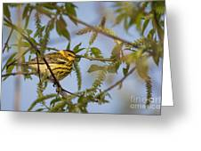 Cape May Warbler Greeting Card