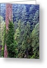 Capilano Canyon Ivy Greeting Card by Will Borden