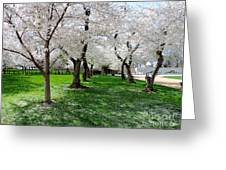 Capitol Gardens Cherry Trees Greeting Card