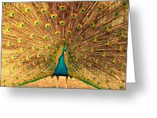 Captain Peacock Greeting Card
