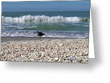 Captiva Island II Greeting Card