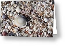 Captiva Island Iv Greeting Card