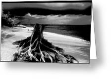 Captiva Storm Greeting Card