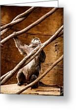 Captivity Greeting Card