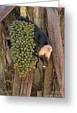Capuchin Monkey Lunch Greeting Card