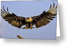 Caracara Landing Greeting Card