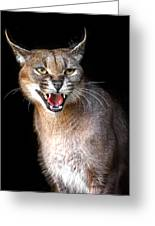 Caracal Hissy Fit Greeting Card
