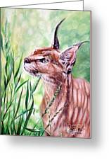 Caracal Greeting Card