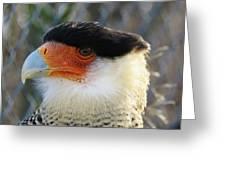 Caracara Bird Greeting Card