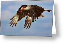 Caracara In Flight Greeting Card