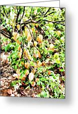Carambola  Greeting Card