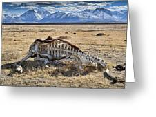Carcass With A View Greeting Card