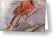 Cardinal - Male Greeting Card