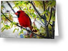 Cardinal 1 Greeting Card