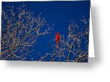 Cardinal Against Blue Sky Greeting Card
