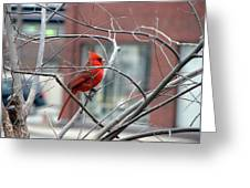 Cardinal Amid The Twigs Greeting Card