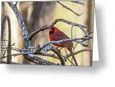 Cardinal Among The Branches Greeting Card
