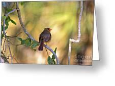 Cardinal  At Buschman Park Greeting Card
