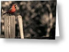 Cardinal At His Post Greeting Card