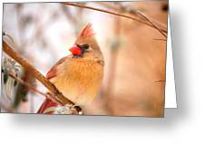 Cardinal Bird Female Greeting Card by Peggy  Franz