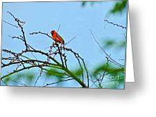 Cardinal Calling Greeting Card