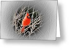 Cardinal Centered Greeting Card