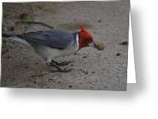 Cardinal Examining Food Greeting Card