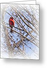 Cardinal I Greeting Card