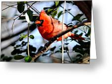 Cardinal IIi Greeting Card