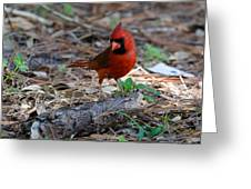 Cardinal In Charge Greeting Card by Julie Cameron
