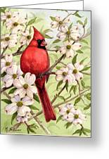 Cardinal In Dogwood Greeting Card