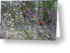 Cardinal In Flowering Tree Greeting Card