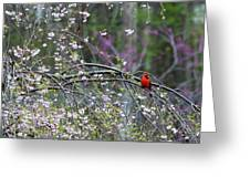 Cardinal In Flowering Tree Greeting Card