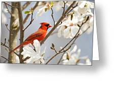 Cardinal In Magnolia Greeting Card